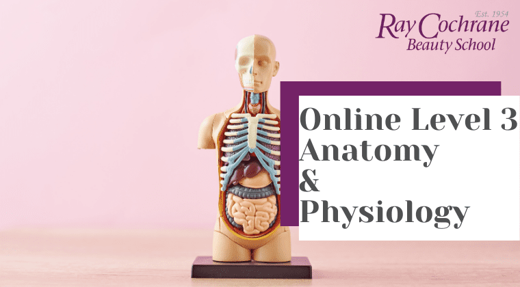 VTCT Online Level 3 Anatomy & Physiology (1)